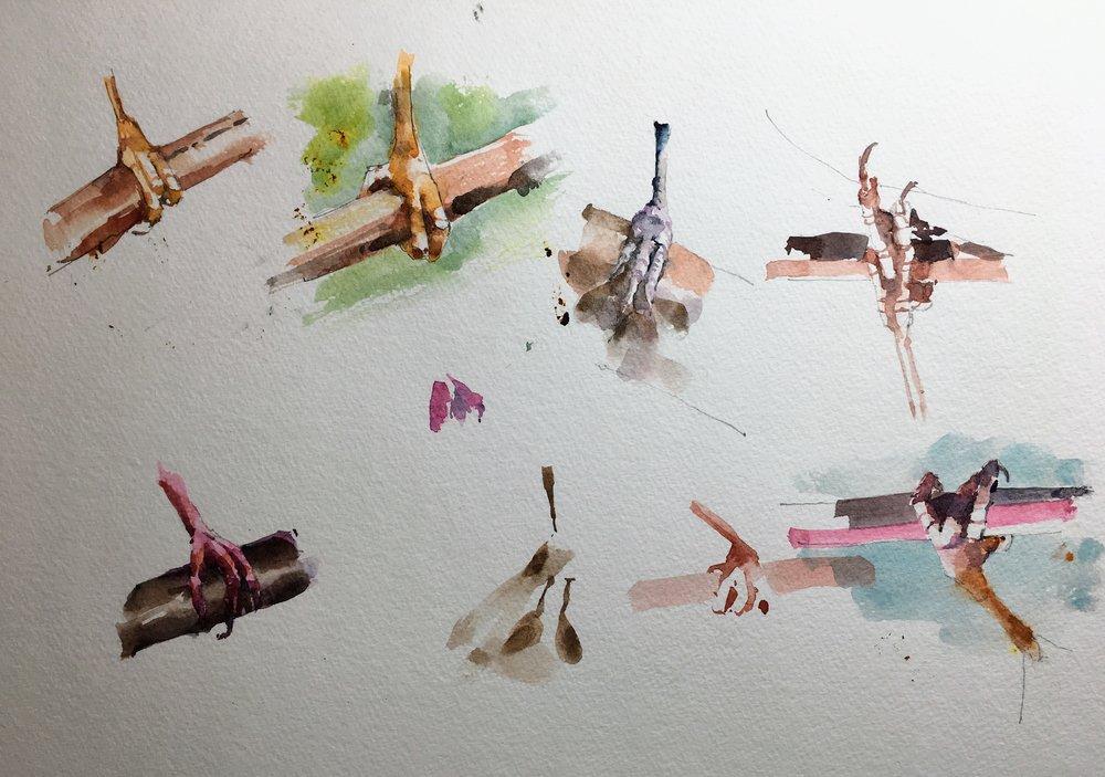 bird_feet_watercolor.JPG