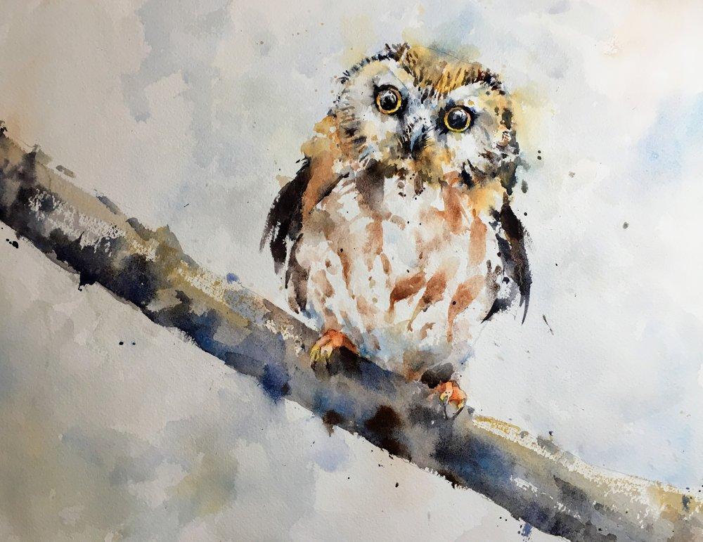 saw-whet-owl-watercolor.JPG