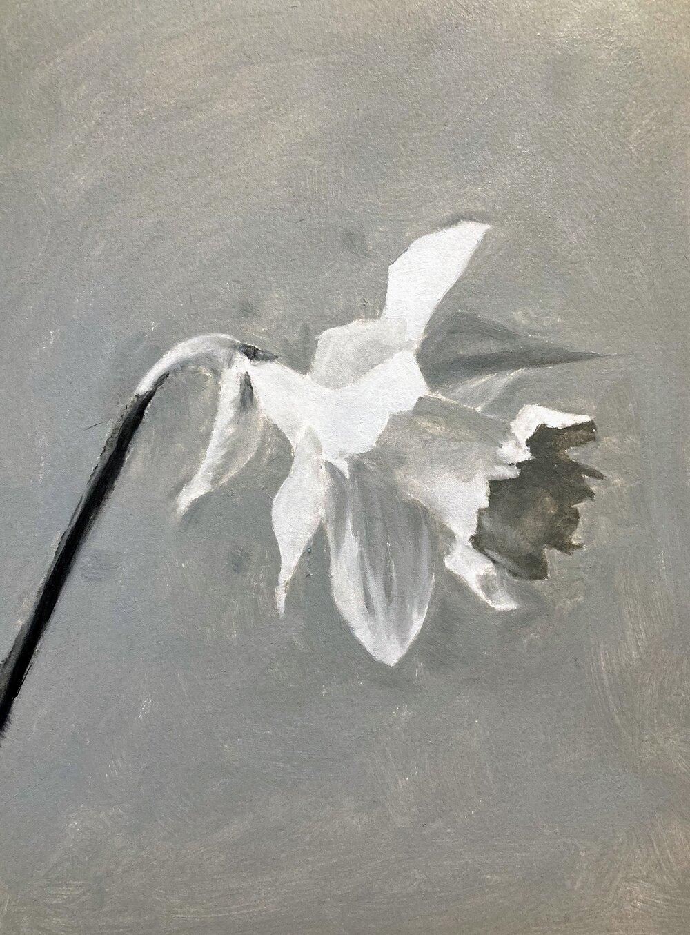 daffodil_value_study.jpg