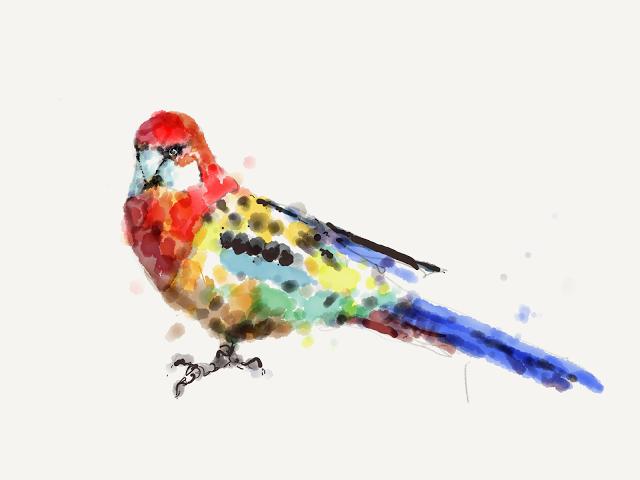 Conure Digital Painting