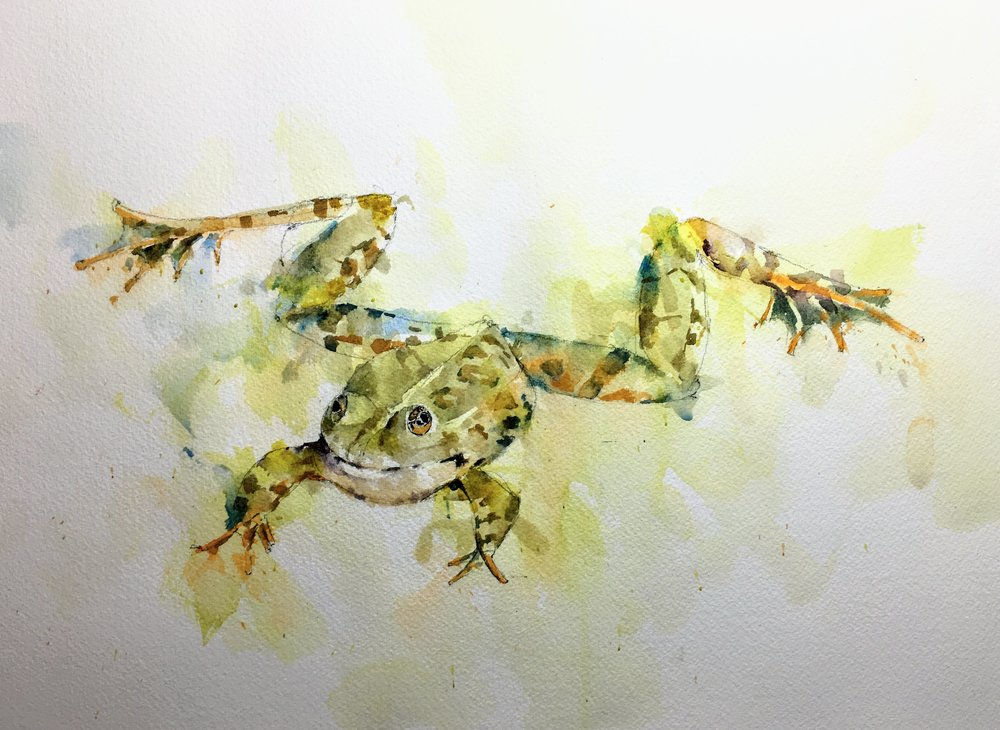 """Loose Frog. Michele Clamp. Watercolor 11""""x14"""""""