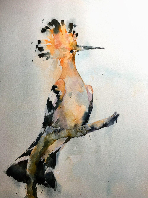 hoopoe_watercolor.JPG
