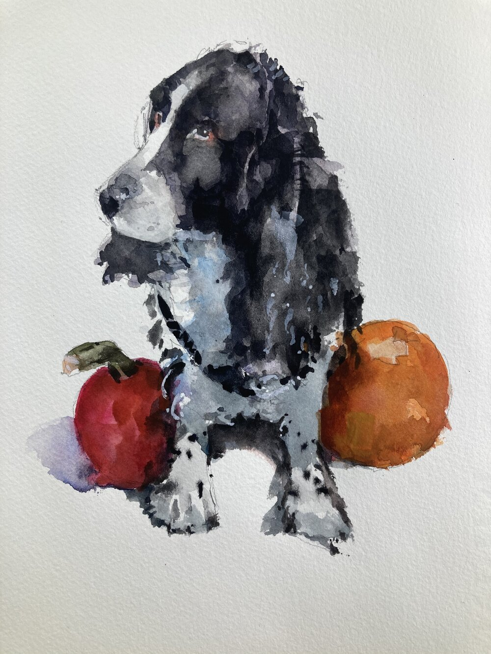 """Sketch of Leo.  Michele Clamp Watercolor. 10""""x8"""""""
