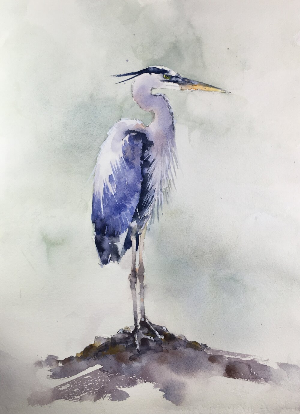 """Standing Blue Heron.   Michele Clamp.  Watercolor.  11""""x14"""""""