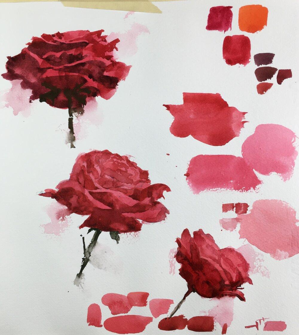 rose_studies_watercolor_painting