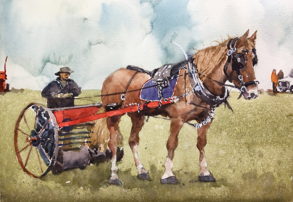 """Working horse. Michele Clamp.  Watercolor.  11""""x14"""""""