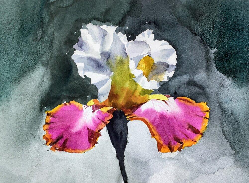 "Iris Study.  Michele Clamp.  Watercolor 11""x14"""