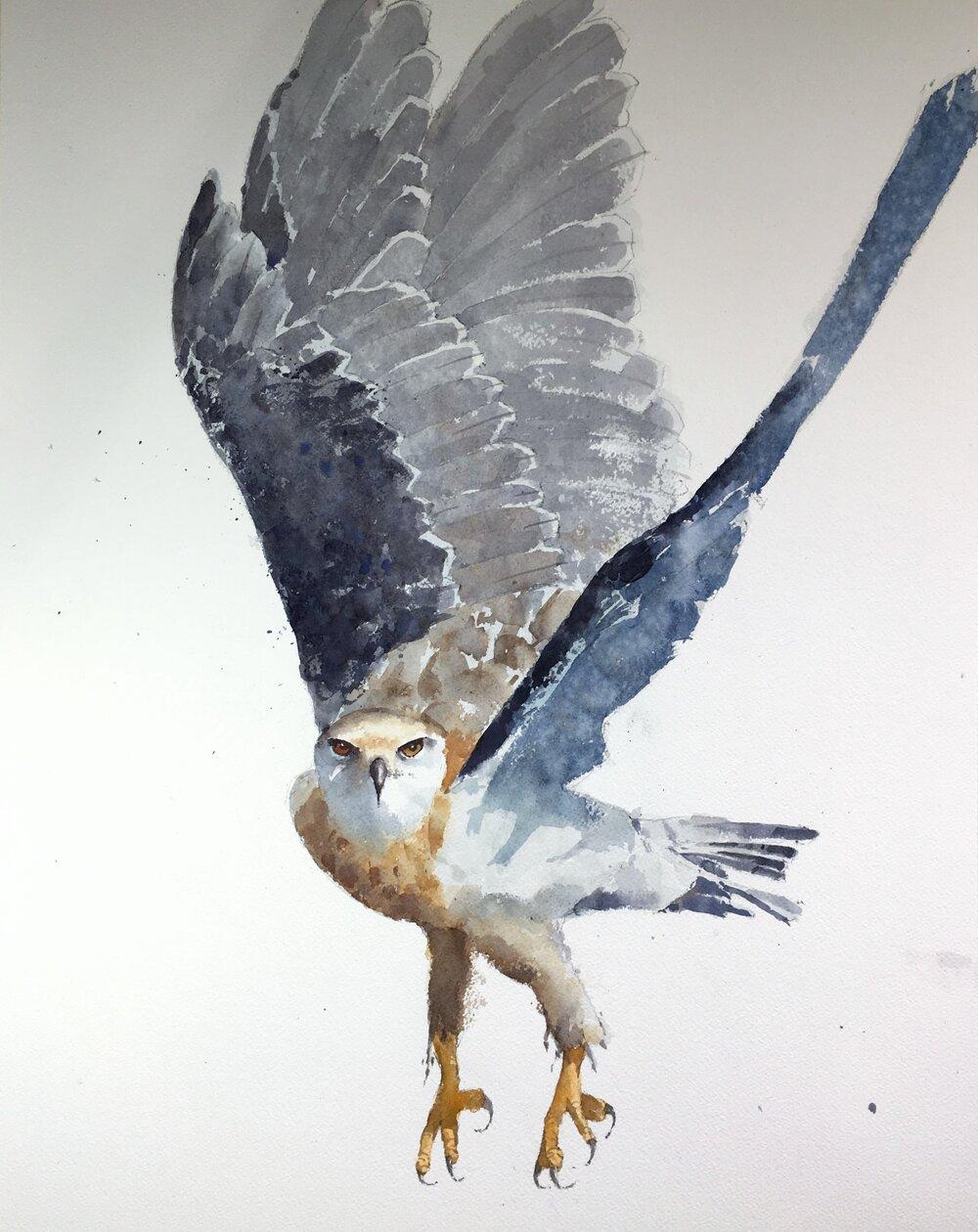 hawk_watercolor_painting