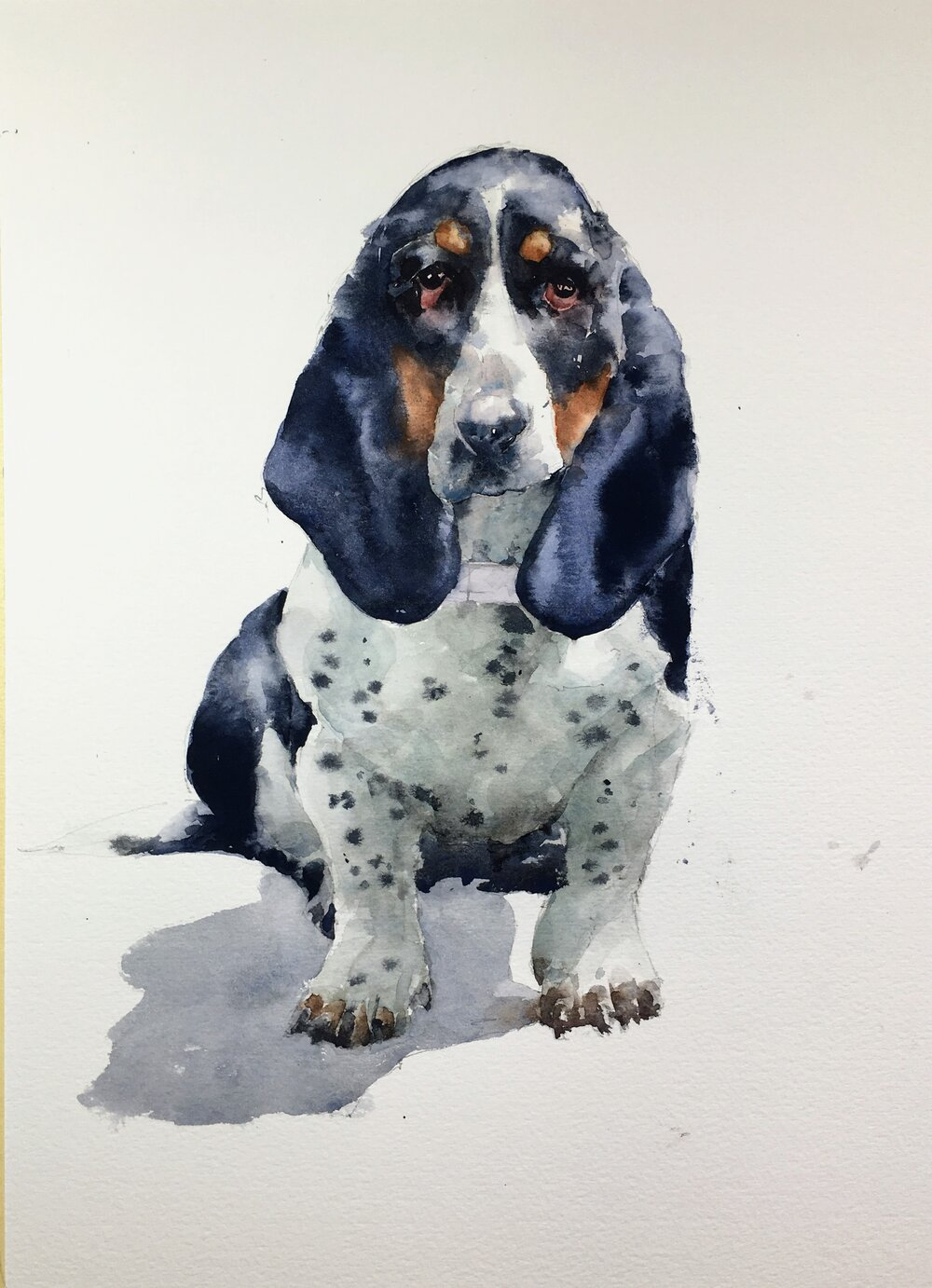 """Basset Hound. Michele Clamp. Watercolor. 14""""x11"""""""