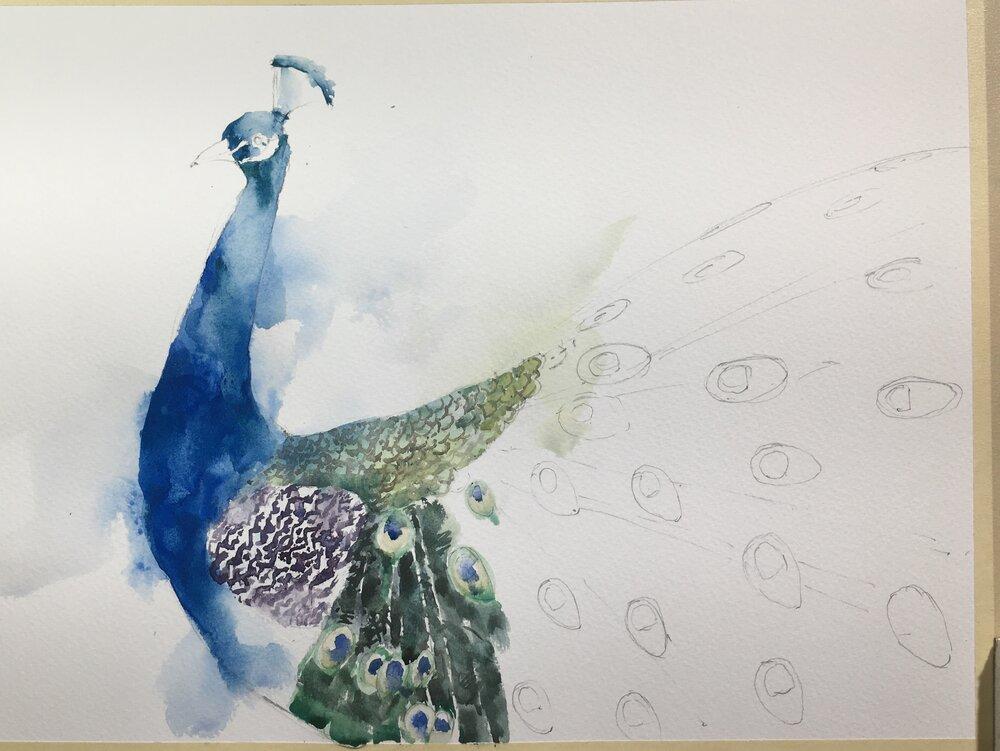 peacock_watercolor_painting_in_progress