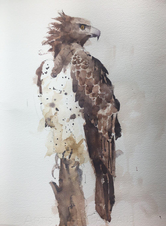 """Hawk.  Michele Clamp.  Watercolor.  14""""x11"""""""