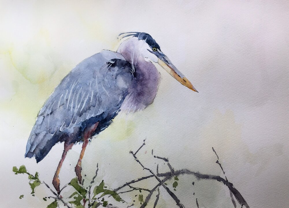 """Blue Heron. Michele Clamp. Watercolor 11""""x14"""""""