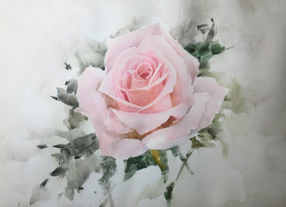 """Rose. Michele Clamp. Watercolor 11""""x14"""""""