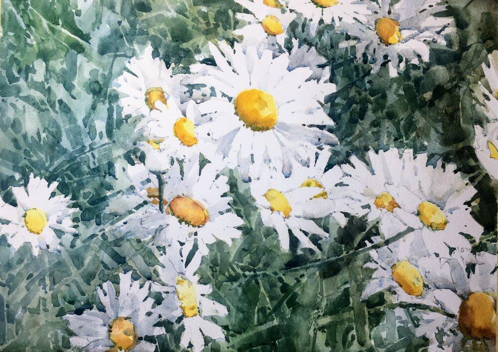 daisies_watercolor_painting