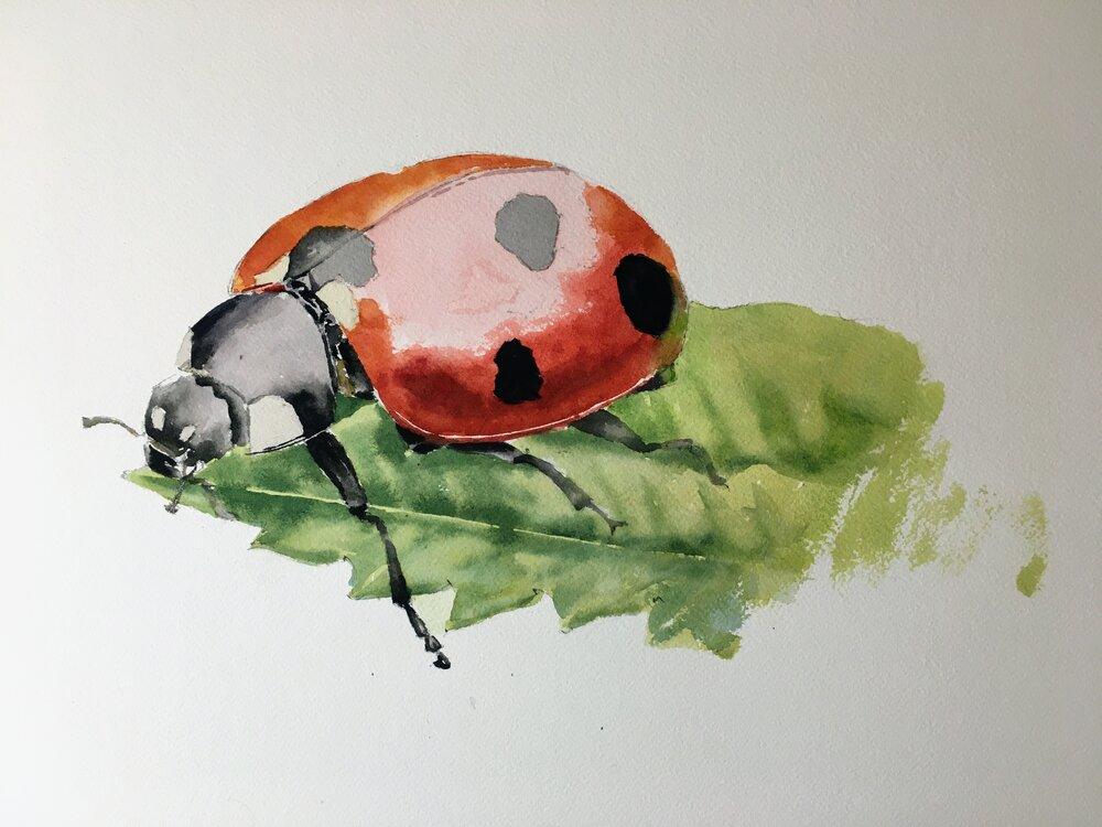 """Ladybug.  Michele Clamp.  Watercolor.  11""""x14"""""""