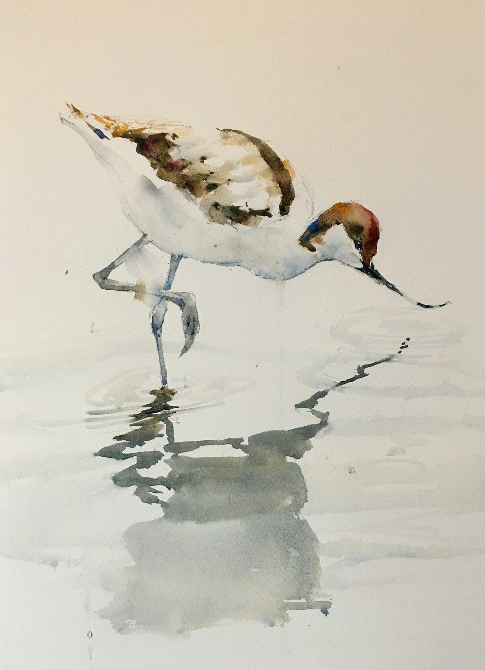 "Avocet.  Michele Clamp.  Watercolor 14""x11""."