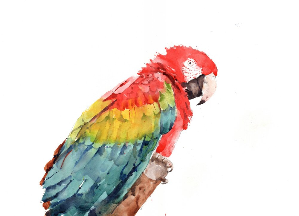 """Macaw. Michele Clamp. Watercolor. 11""""x14"""