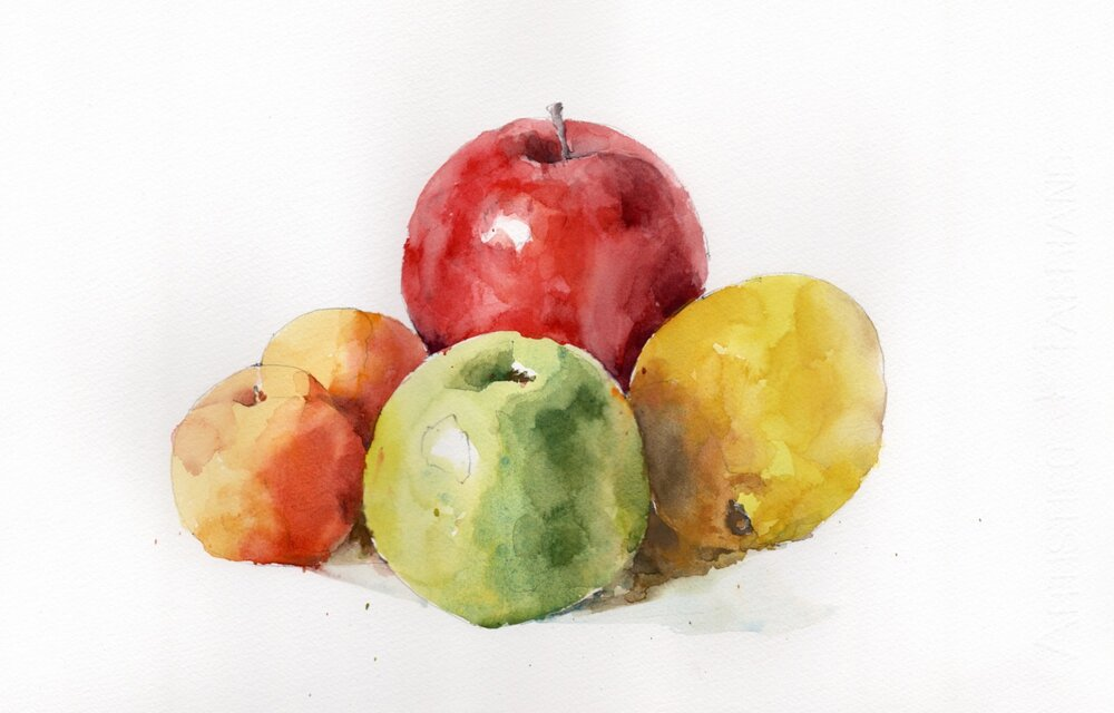 """Fruit Still Life.  Michele Clamp.  Watercolor 11""""x14"""""""