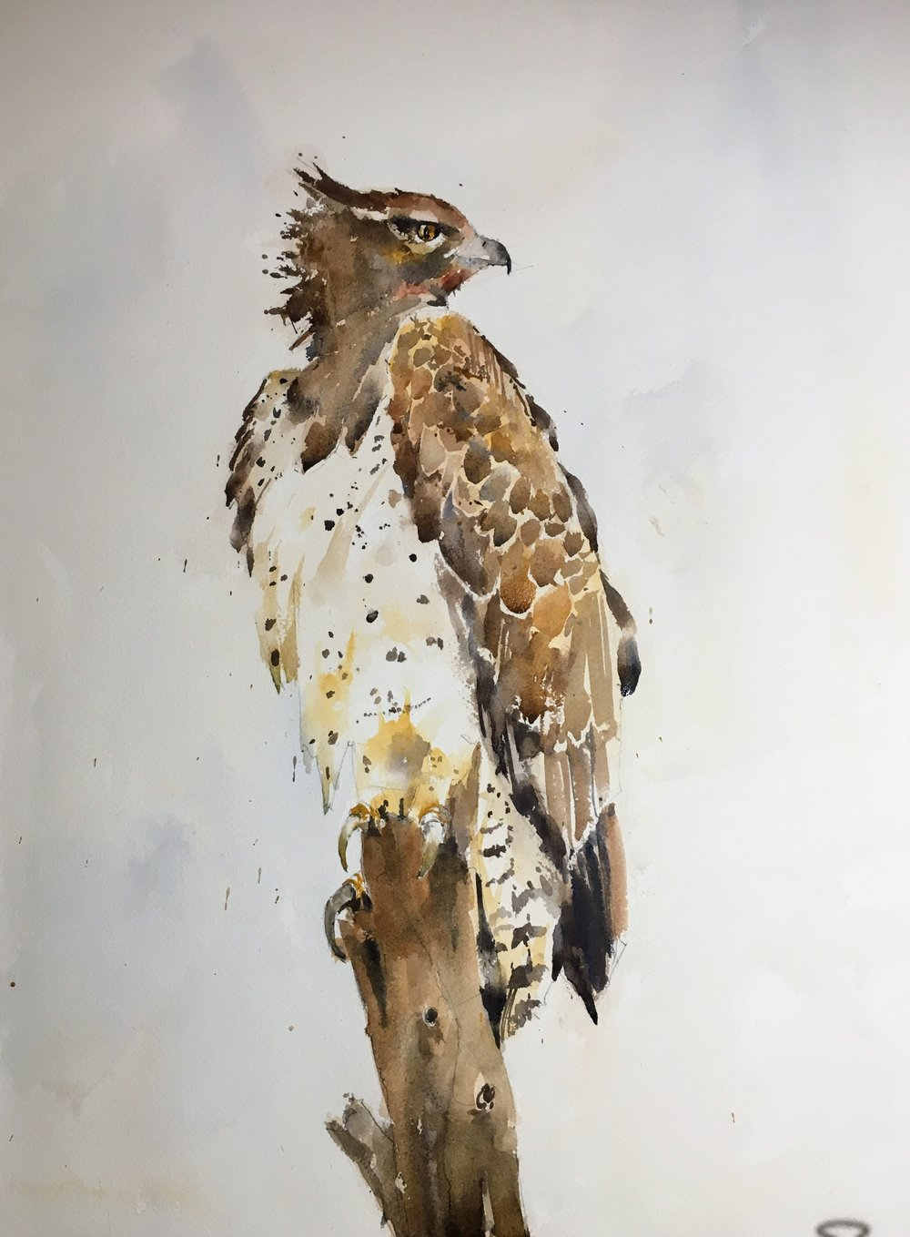 martial_eagle_watercolor_paintingJPG