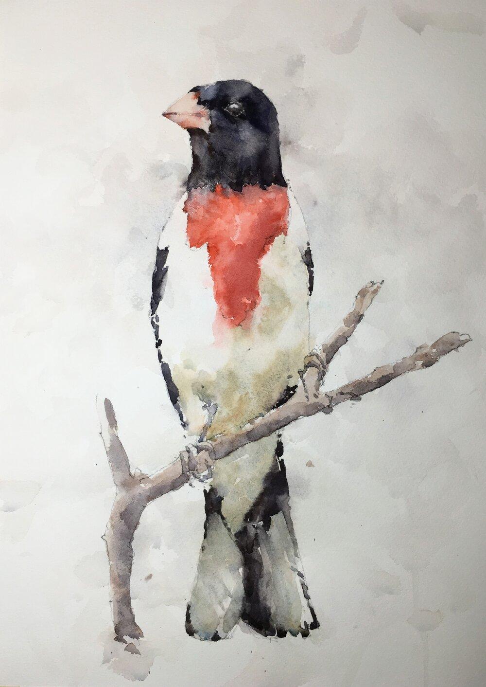 "Rose-breasted grosbeak.   Michele Clamp.  Watercolor 14""x11"""