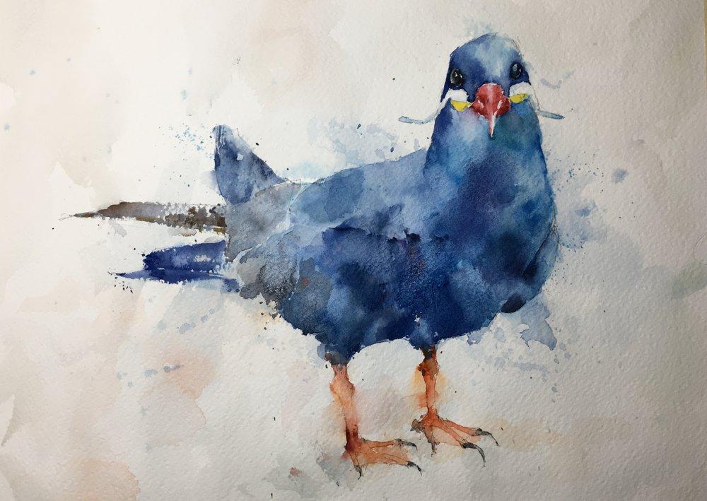 "Inca Tern. Michele Clamp. Watercolor. 11""x14"""