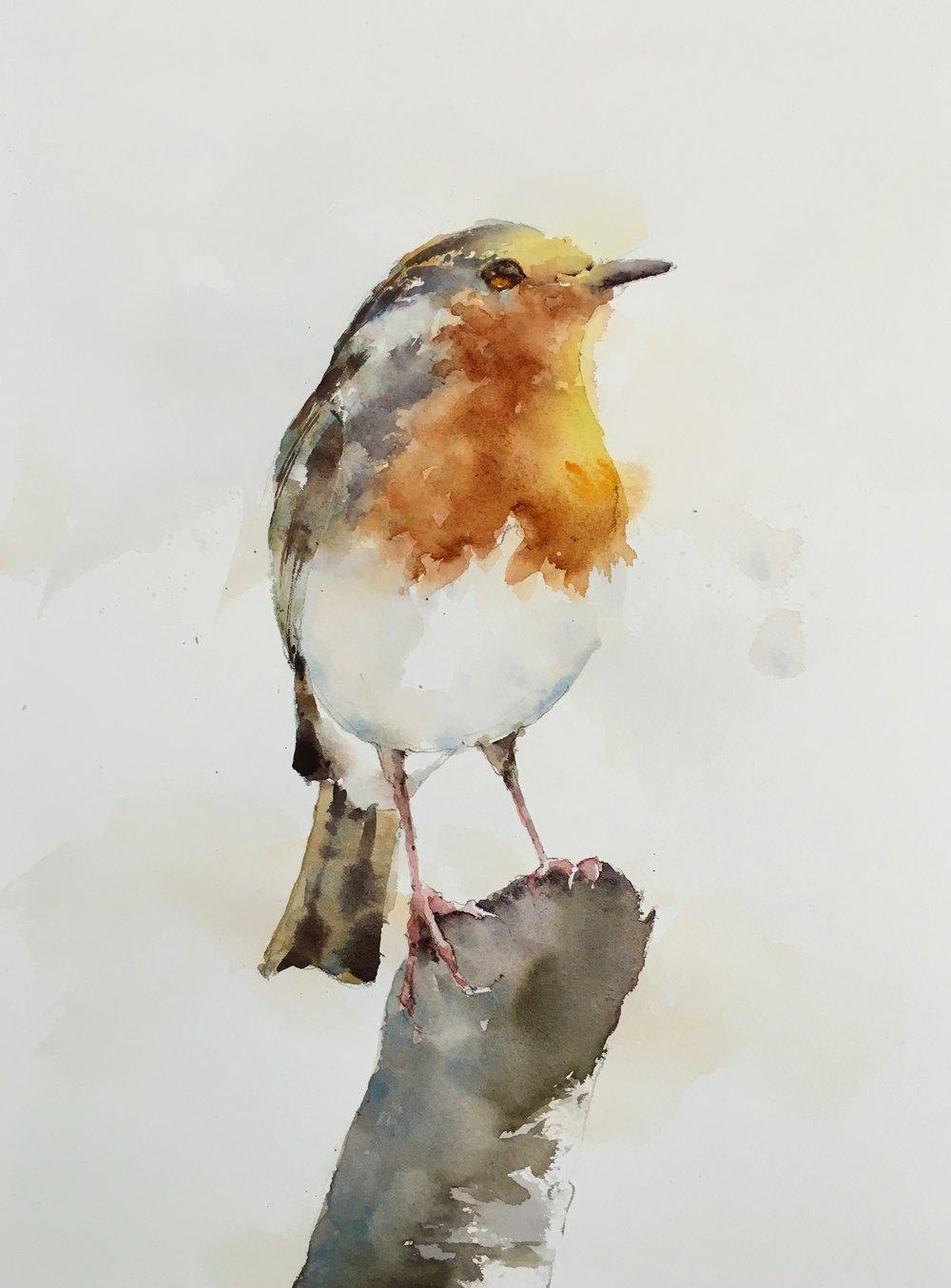 """Robin.  Michele Clamp.  Watercolor 14""""x11"""""""