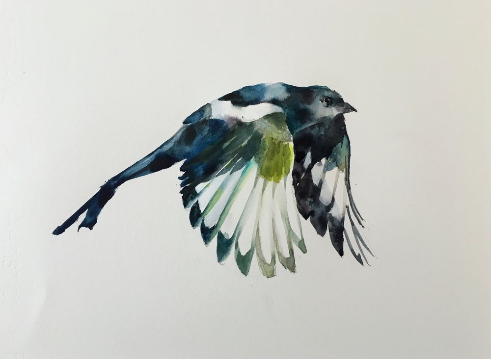 """Magpie.  Michele Clamp. Watercolor. 11""""x14"""""""