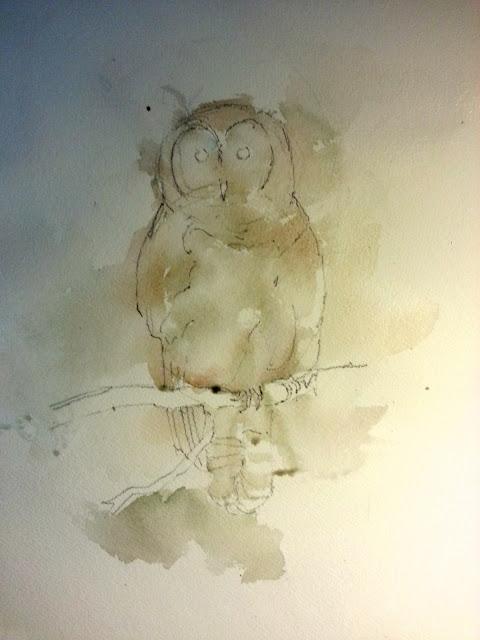 Barred Owl Watercolor