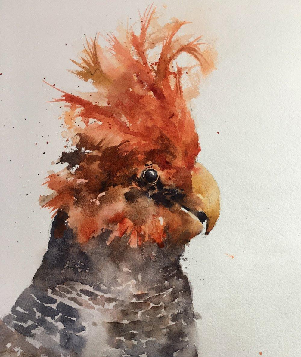 "Gang-Gang Cockatoo.  Michele Clamp.  Watercolor. 10""x8""."