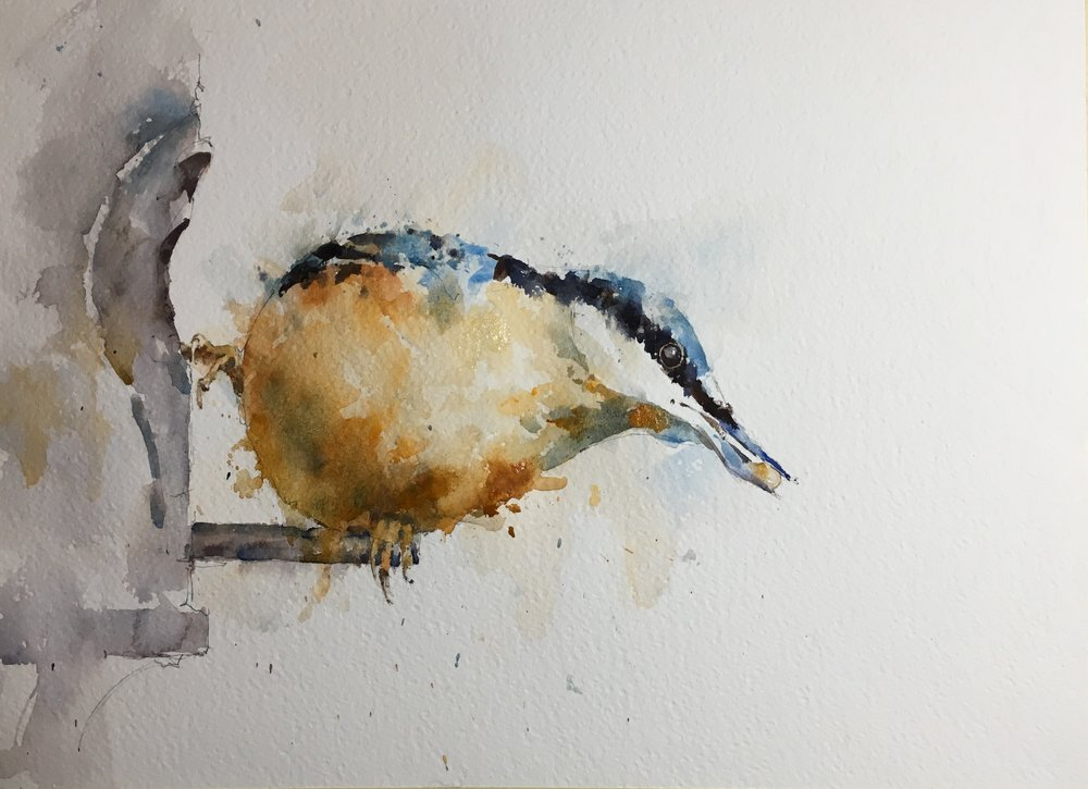 """Nuthatch.  Michele Clamp.  Watercolor 11""""x14"""""""