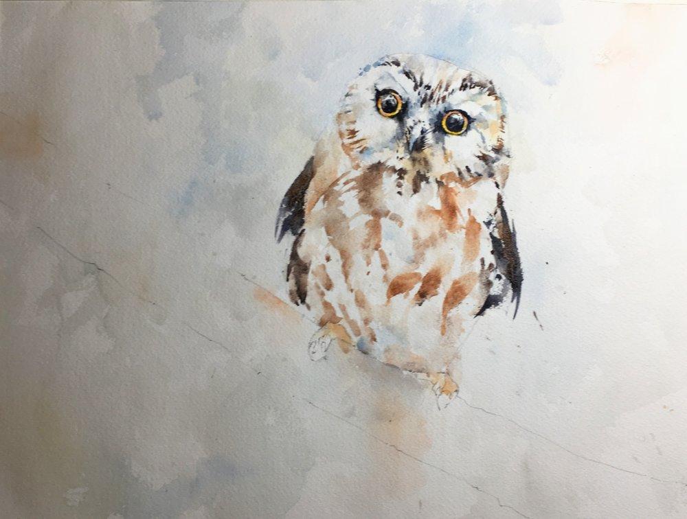 owl_watercolor_in_progress.JPG