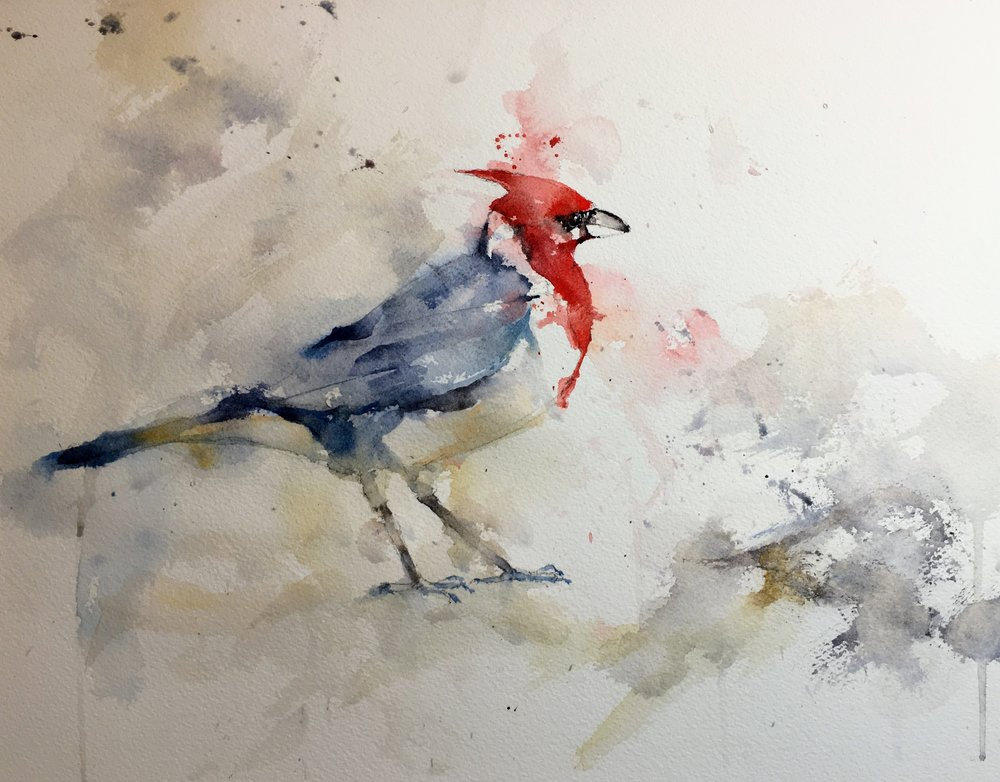 red-crested-cardinal-watercolor.JPG