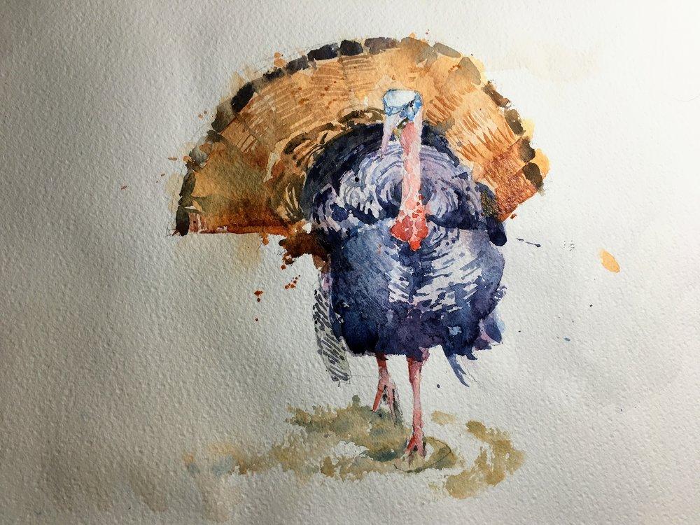 """Turkey.  Michele Clamp.  Watercolor 11""""x14"""""""
