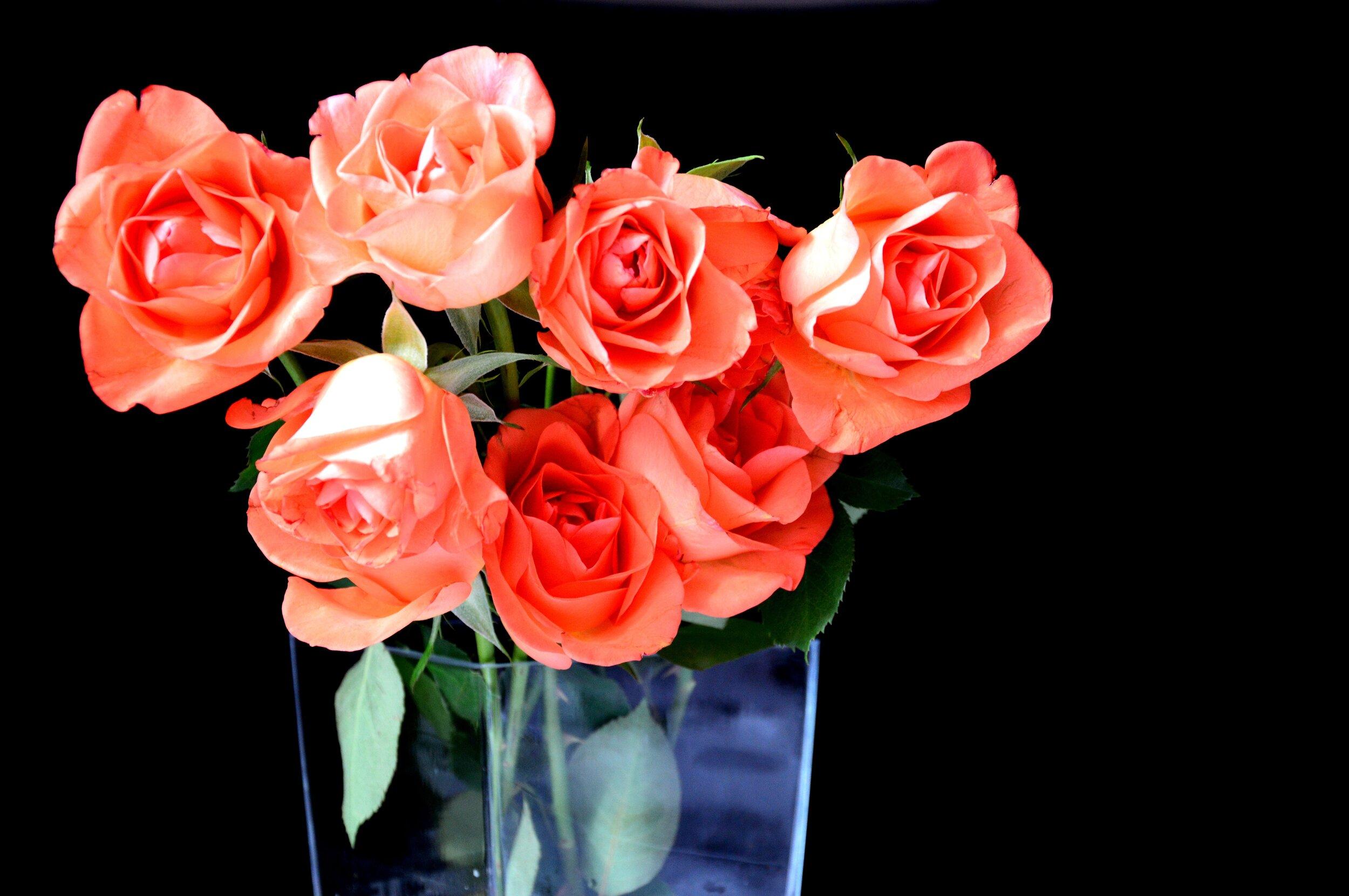 roses-1155986.jpg