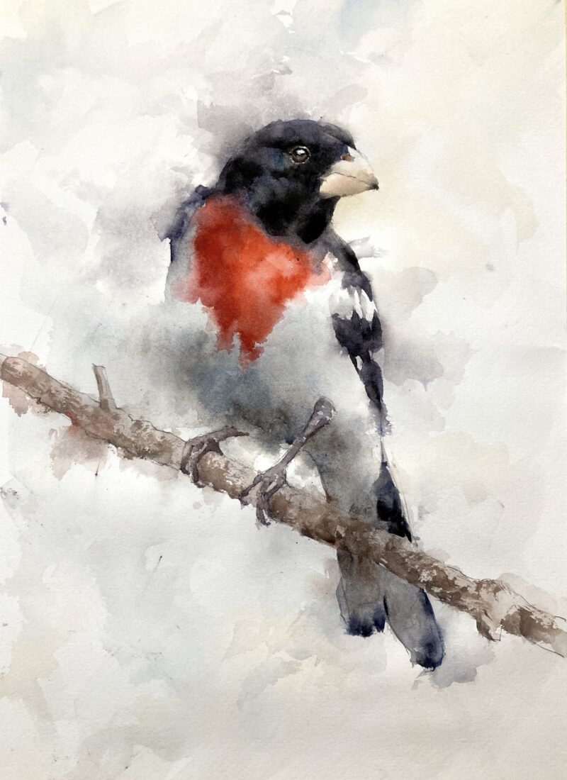 Grosbeak watercolor painting