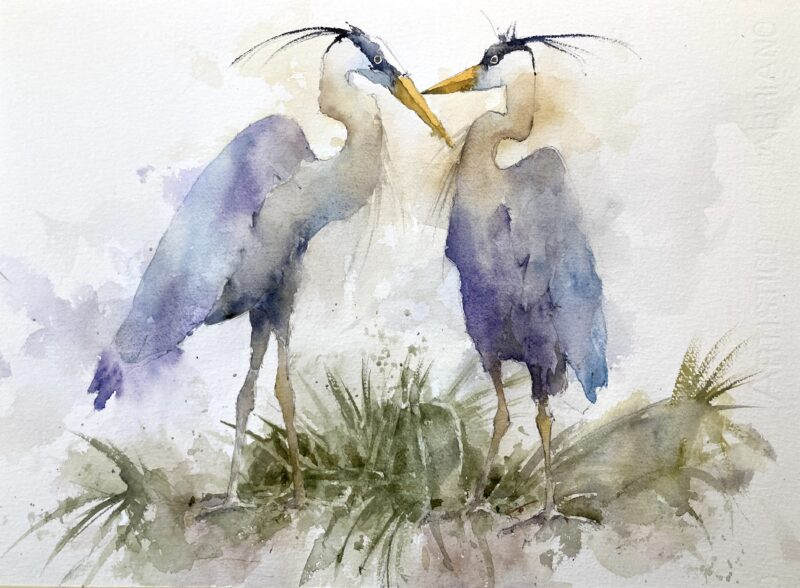 herons nesting watercolor by Michele Clamp